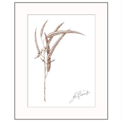 Sepia Sapling is a fine line pen and ink drawing on paper by deGroot-Arts
